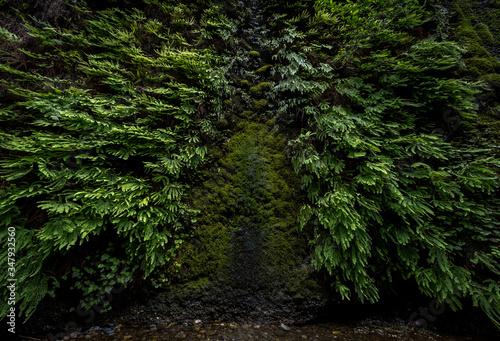Canvas-taulu Fern Green Canyon Dark Lush
