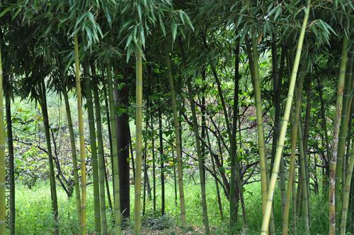 Murais de parede Bamboos On Field