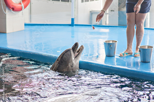 Care, rehabilitation, bathing, diving, games, fun and entertainment with a dolphin in a sea-water pool. Selective front and back focus, artistic noise. dolphinarium, oceanarium.