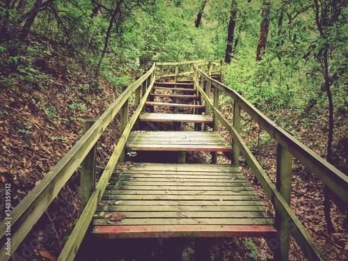 Footbridge In Forest Fototapet