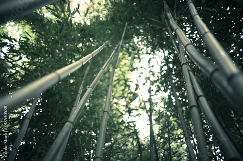 Low Angle View Of Bamboos Growing In Forest Against Sky Poster Mural XXL