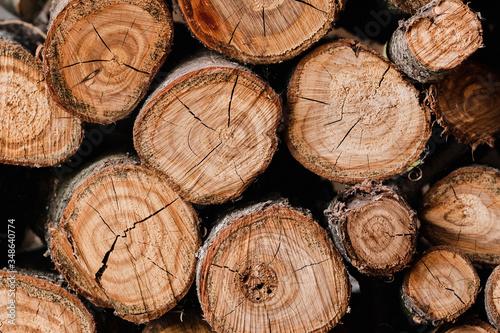 Fototapeta Woodpile of freshly harvested pine logs on a forest road