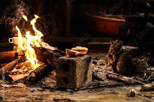 Cat Looking At Bonfire On Field Fototapet