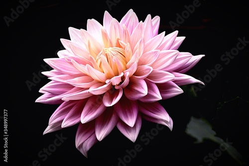 Cuadros en Lienzo Close-up Of Pink Flower
