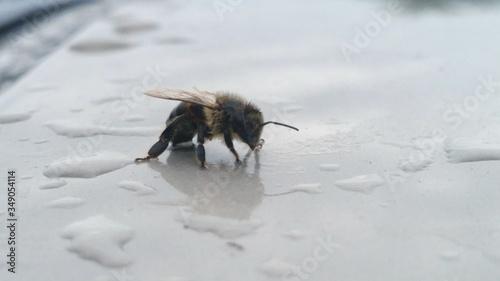 Obraz na plátne High Angle View Of Bee On Wet Field During Rainy Season