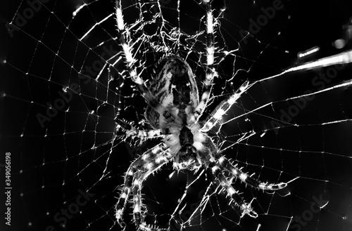 Fotografia, Obraz Close-up Of Spider On Web