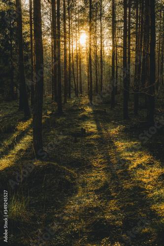 Moody forrest lanscape in Uppsala Sweden Fototapeta