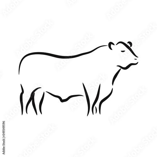 Fotomural beef angus cattle logo vector design