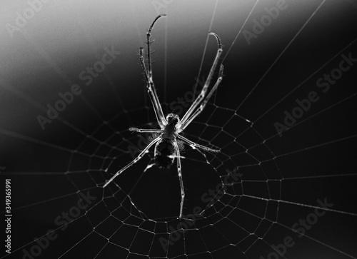Stampa su Tela Close-up Of Spider On Web