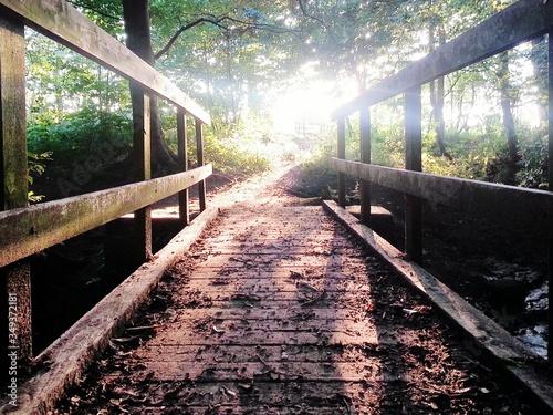 Tablou Canvas Wooden Footbridge In Forest