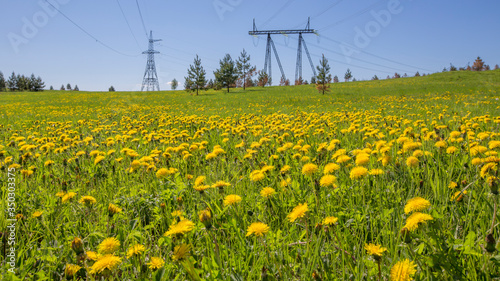 Photo meadow on a hillside overgrown with yellow dandelions on a sunny summer day