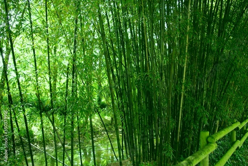 Photographie Bamboos On Field