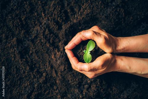 Vászonkép Farmer hand holding young plant