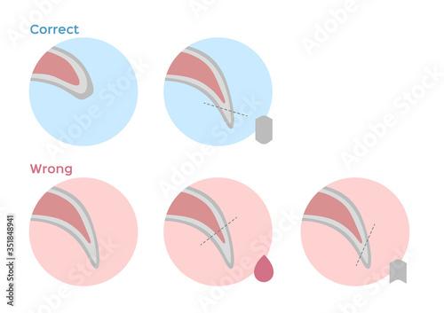 Carta da parati dog nail trimming / fingernail vector