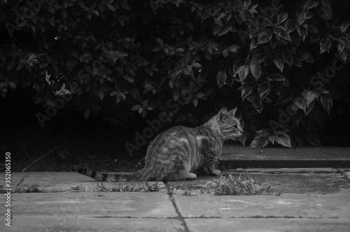 Cat Sitting On Sidewalk Fototapeta