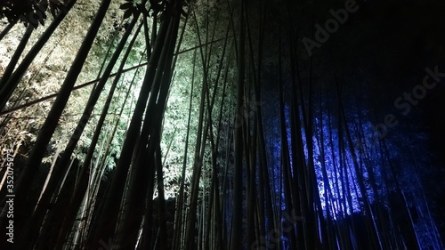 Fotografía Low Angle View Of Bamboos In Forest At Night