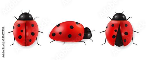 Obraz na płótnie Realistic ladybug set isolated, hello spring, red insect, beauty ladybug detail,