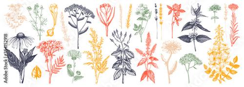 Fotografie, Tablou Medicinal herbs collection