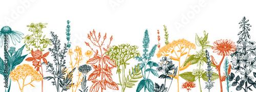 Tablou Canvas Hand drawn medicinal herbs banner design
