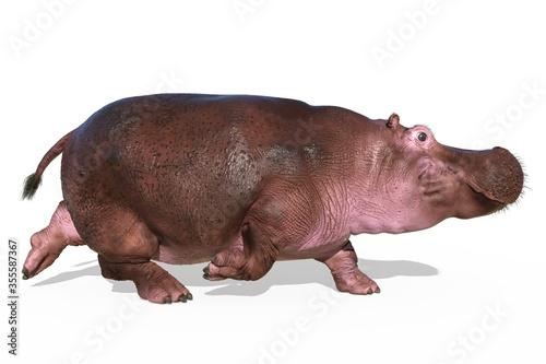 Fotografie, Tablou Hippopotamus isolated on white background 3d illustration