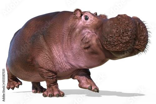 Hippopotamus isolated on white background 3d illustration Fototapet