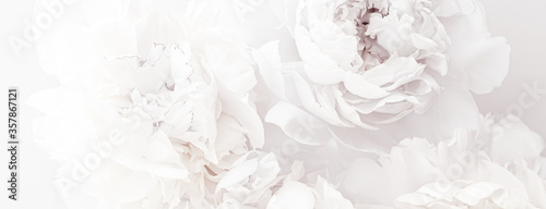 Fotografia Pure white peony flowers as floral art background, wedding decor and luxury bran