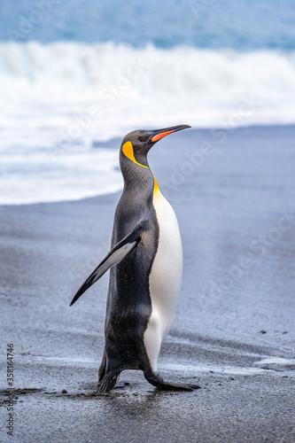 Fototapeta Antarctica, South Pole
