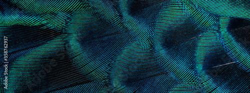 Stampa su Tela Closeup peacock feathers ,Beautiful background, wallpaper, texture