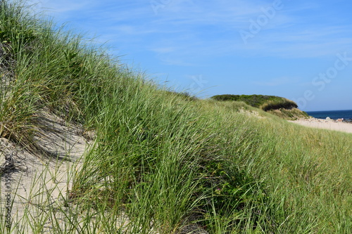 sand dunes and grass