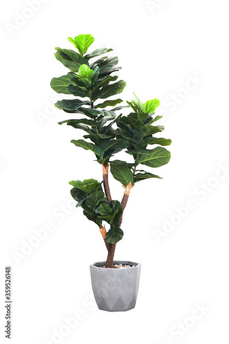 Wallpaper Mural Artificial fiddle leaf fig or ficus lyrata in pot isolated on white