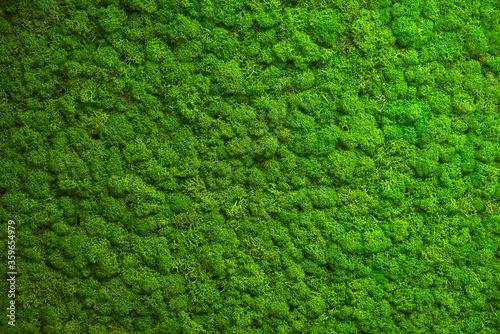 Photo Close up green moss texture, background. Green texture