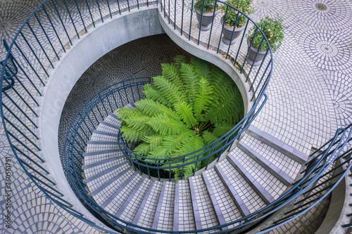 Large fern growing at the base of a spiral staircase, Embarcadero Center, San Fr Tapéta, Fotótapéta