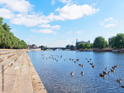 Fotografie, Tablou Gaggle of Geese on the River Trent close to Trent Embankment