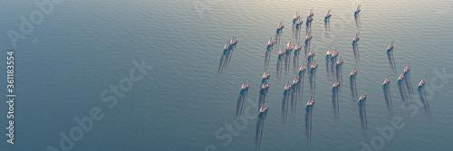 Fototapeta sailboat sailing in the sea