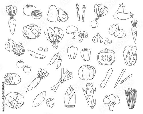 Canvastavla 手書きの野菜のイラストのセット/シンプル/おしゃれ/線画