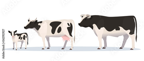 Canvas Vector illustration of bull, cow and calf