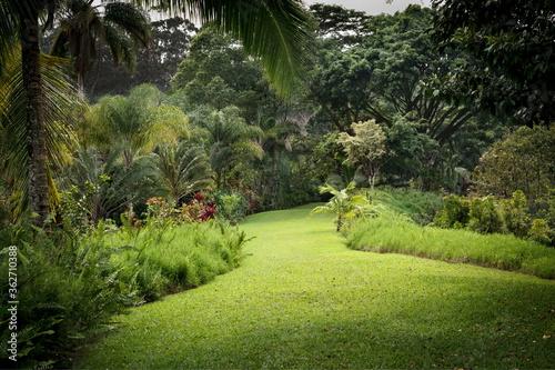 Obraz na plátně A view of the Garden of Eden in Maui, Hawaii.