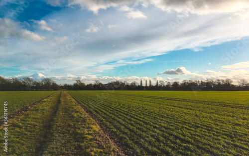 Fotografie, Obraz Scenic View Of Agricultural Field Against Sky