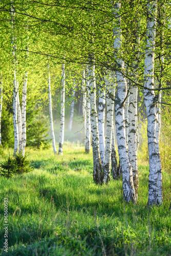 Obraz na płótnie Spring green foliage