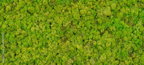 Fotografia green moss background texture Wallpaper