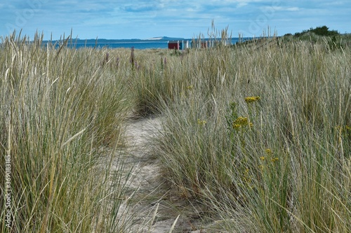 Low view through long grass in sand dunes towards colourful beach huts, sea and blue sky Fototapet