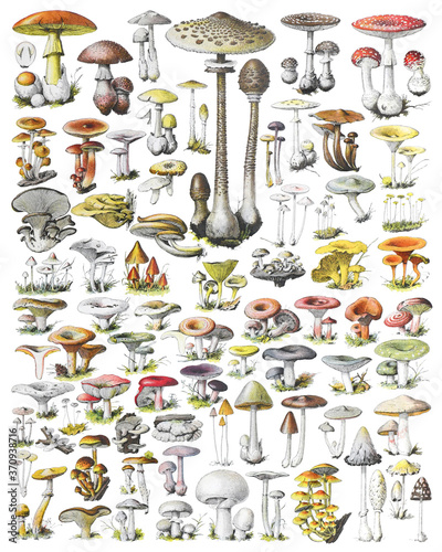 Canvas-taulu Mushroom and toadstool collection - vintage illustration from Adolphe Philippe M