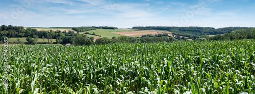 Obraz na płótnie cornfields and meadows under blue sky in french pas de calais near boulogne