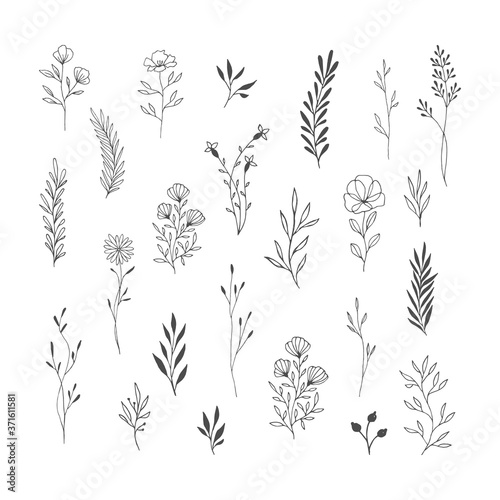 Canvas-taulu Set of botanical design elements