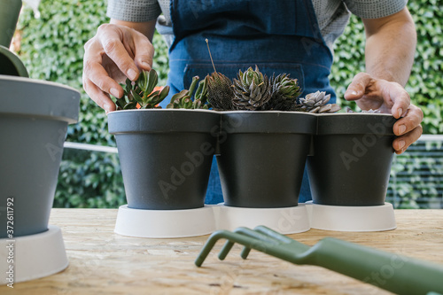Obraz na plátne Crop unrecognizable male grower demonstrating collection of potted cacti with po