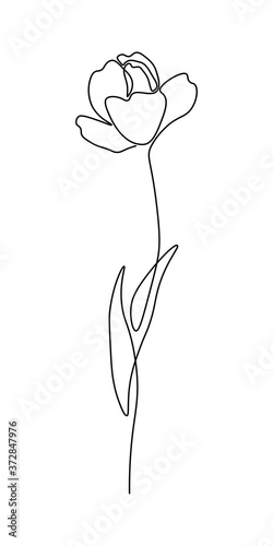 Canvas Print Beautiful blossoming tulip flower in continuous line art drawing style