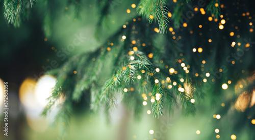 Fotografia Christmas tree background