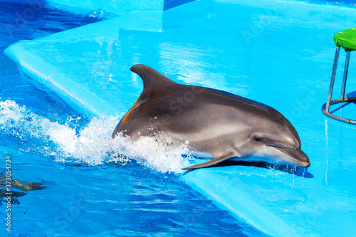 Dolphins on creative entertaining show at dolphinarium with full house of visitors show amazing tricks. Spectators happily delighted in Odessa, Ukraine