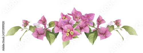 Canvas Print A pink bougainvillaea arrangement hand painted in watercolor isolated on a white background