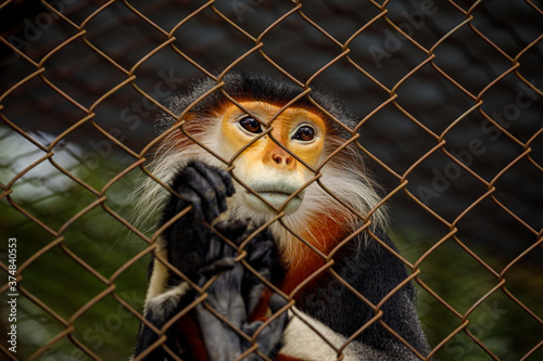 Valokuvatapetti Red legged clothes Monkey at Cuc Phoung Jungle